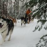 מזחלות שלג בנורבגיה