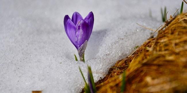 אביב בנורבגיה