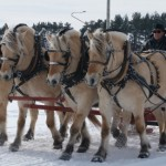רכיבה על סוסים בנורבגיה