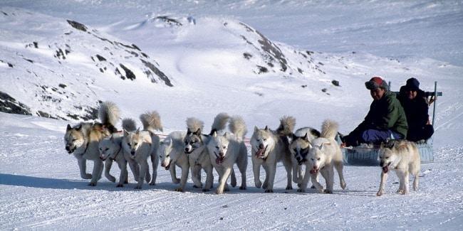 מזחלת שלג עם כלבי האסקי