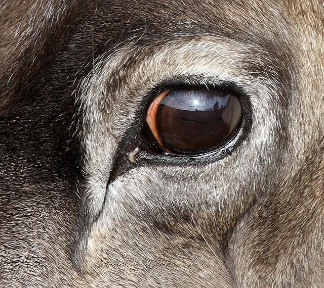 עין של אייל הצפון - סטסדאל