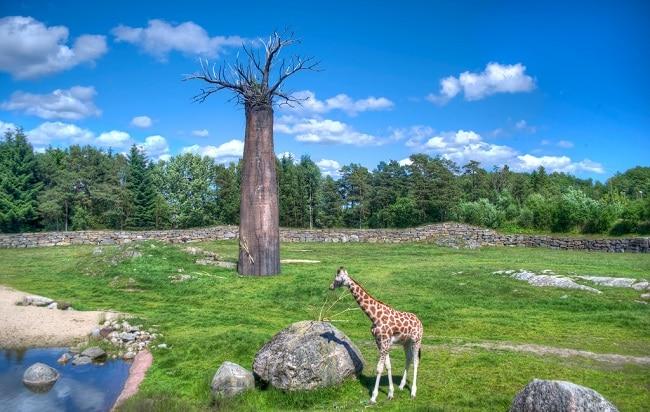 פארק השעשועים וגן החיות Dyreparken - קריסטיאנסנד