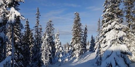 שלג באיזור האפייל - עותק