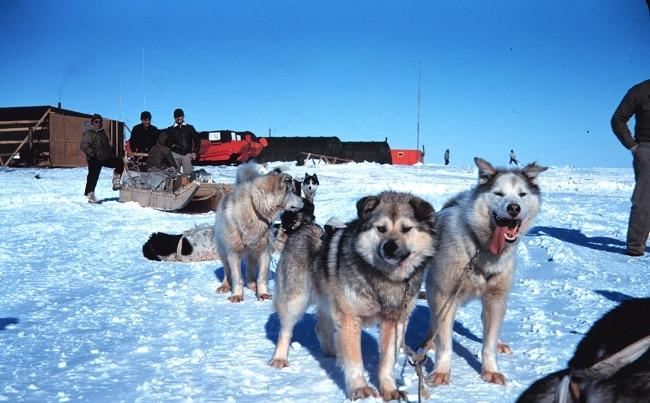 מזחלת כלבים - הדמארק