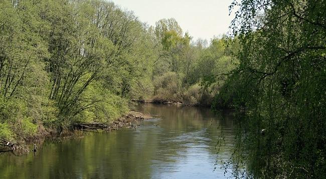 נהר Svartelva - הדמארק
