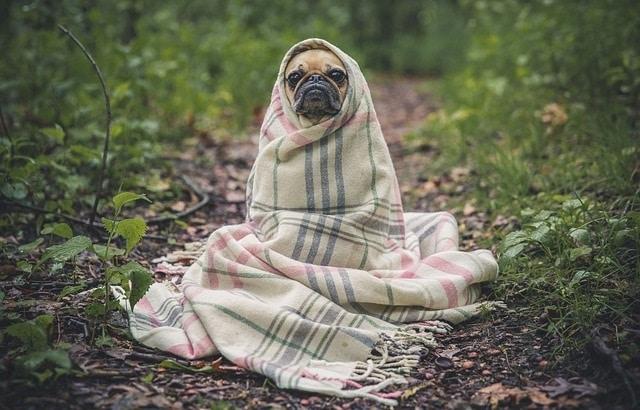 כלב פג מקשיב להנחיות בטיחות