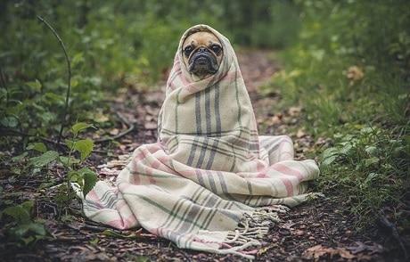 כלב פג מקשיב להנחיות בטיחות - עותק