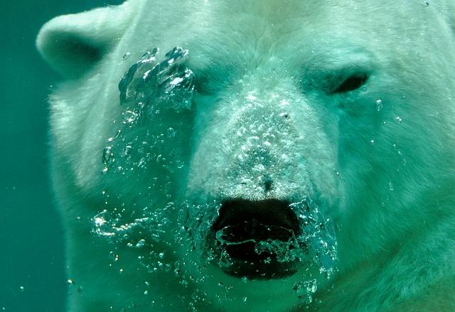דוב קוטב - חלק של עולם החי של שפיצברגן