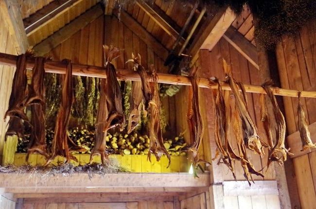 הדגמה של ייבוש דגים מסורתי ב- Lofotr Viking Museum