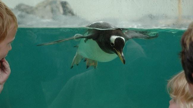 פינגווין וחברים באקווריום של ברגן